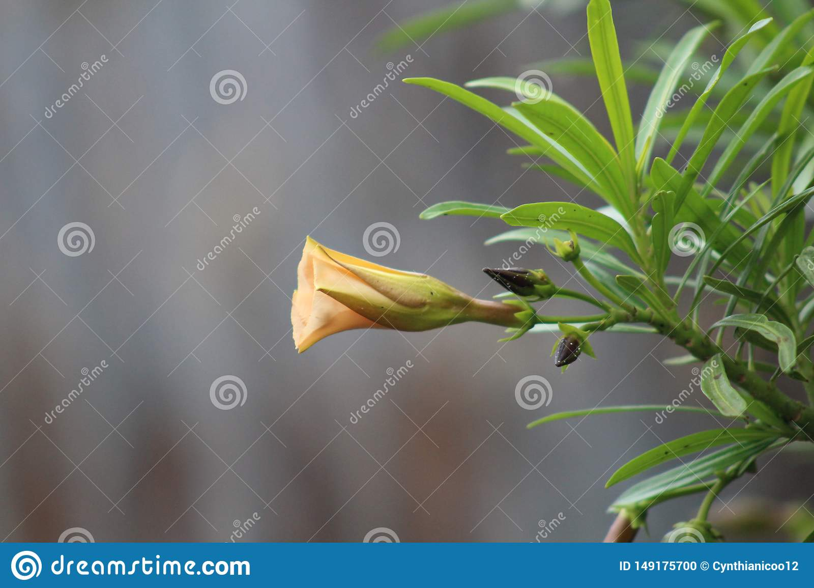 Eine Gr?npflanze w?hrend einer Sommersaison