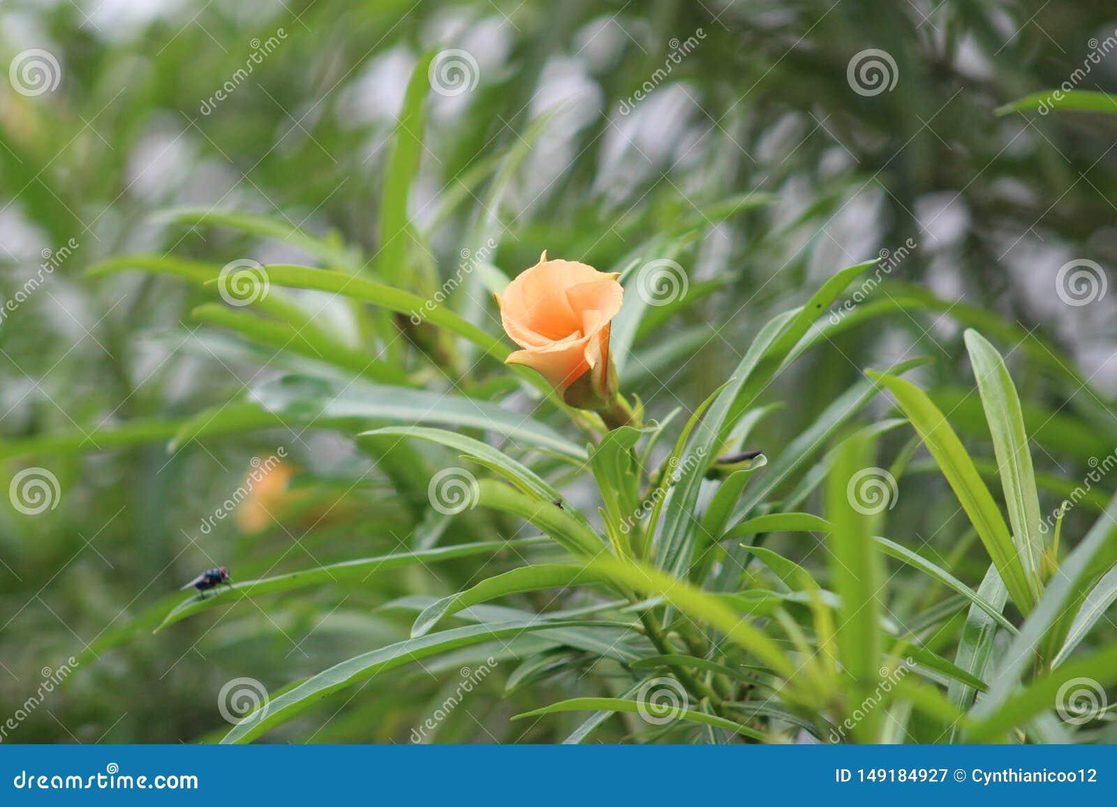 Eine Gr?npflanze w?hrend einer Sommersaison gekennzeichnet durch eine orange Blume