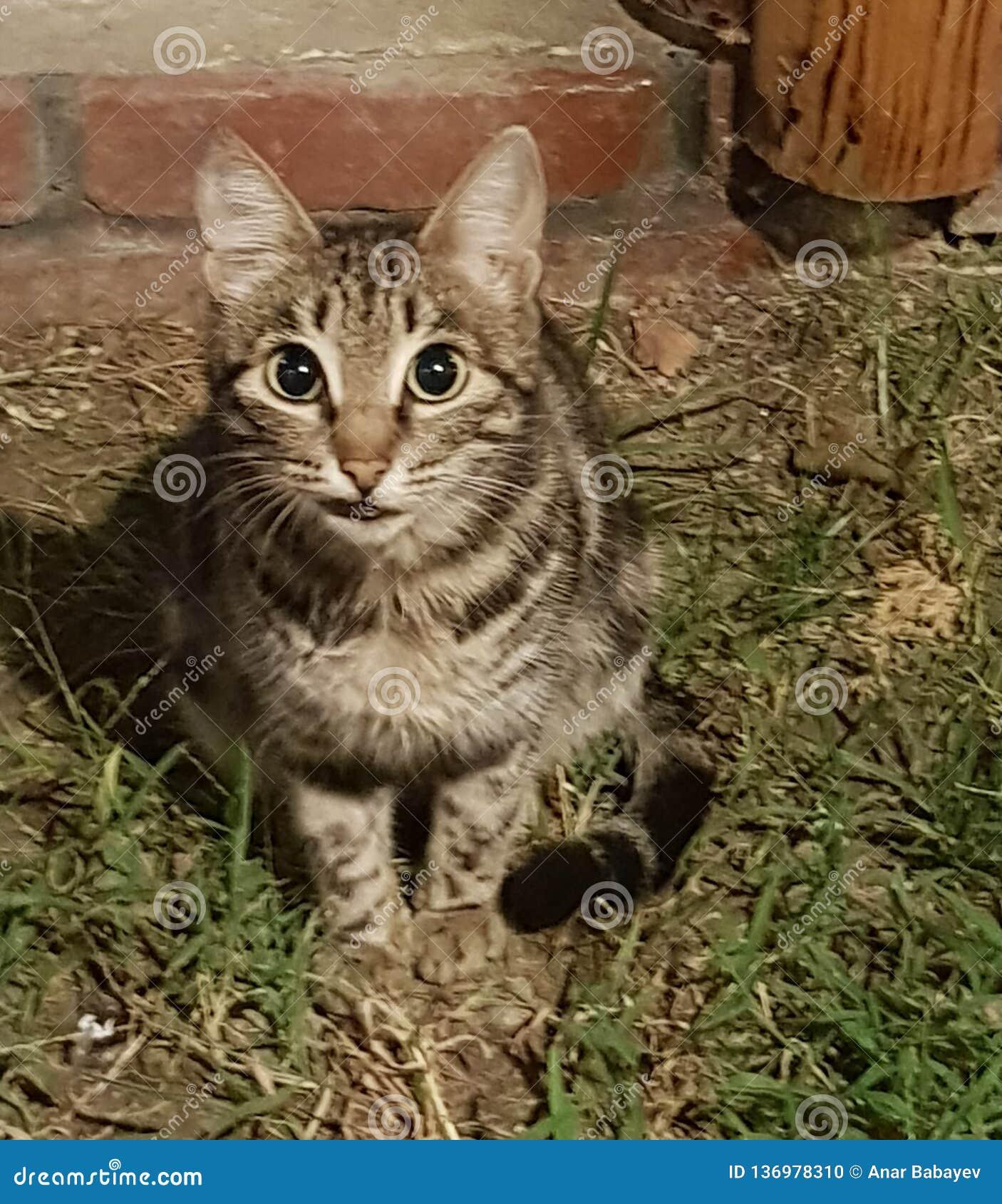 Eine grinsende Katze mit einem missfallenen flüchtigen Blick sitzt auf dem Gras nahe dem Yard auf dem Hintergrund einer Wand und