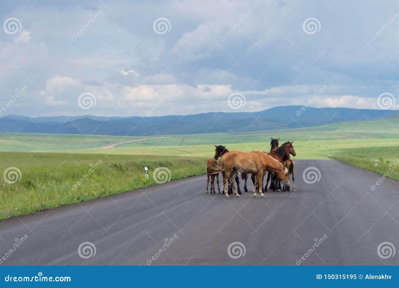 Eine Herde von Pferden steht auf einer Asphaltstraße