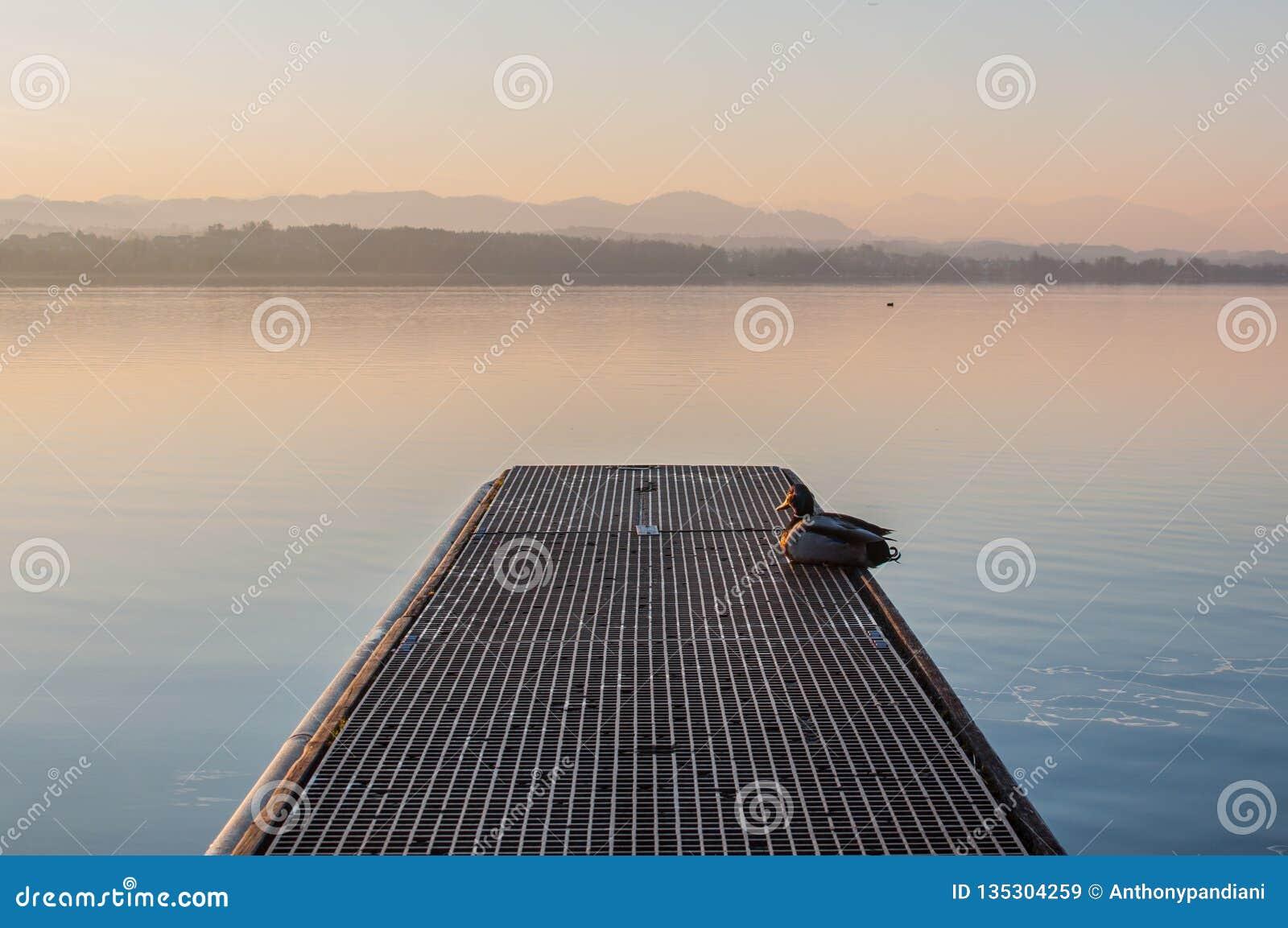 Eine idyllische Landschaft am See Greifensee in der Schweiz