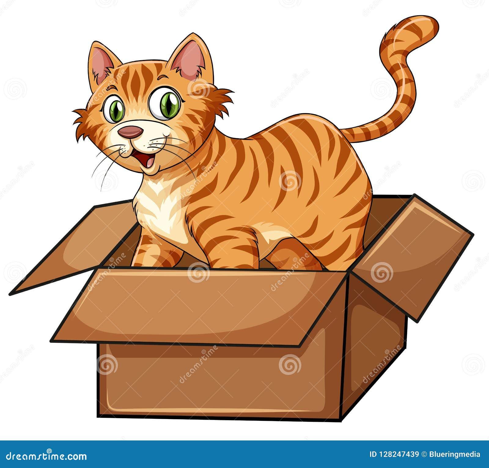 Eine Katze im Kasten