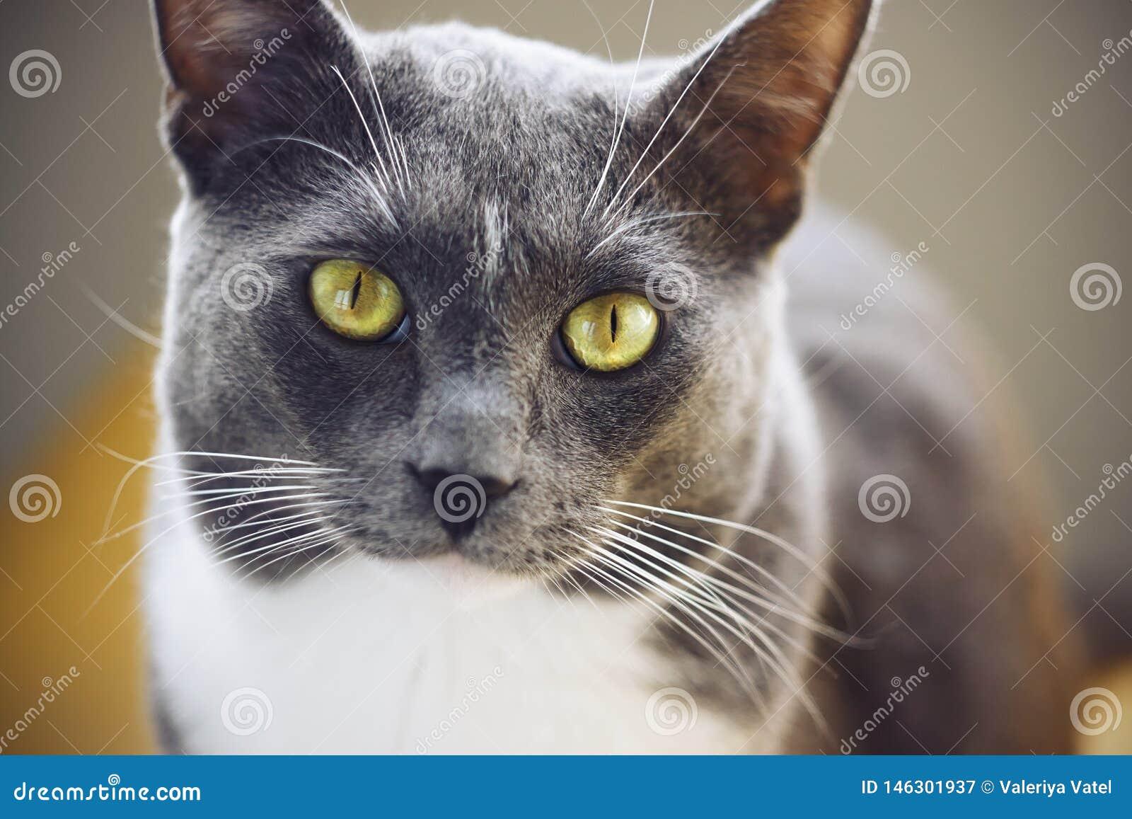Eine Katze mit einer weißen Stelle auf seiner Stirn und gelbgrünen Augen