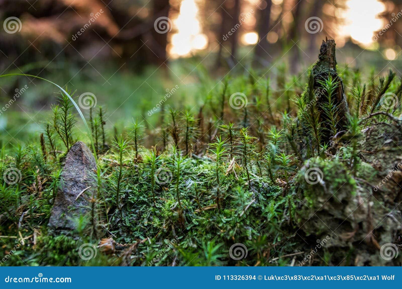 Eine kleine Welt in einem großen Wald