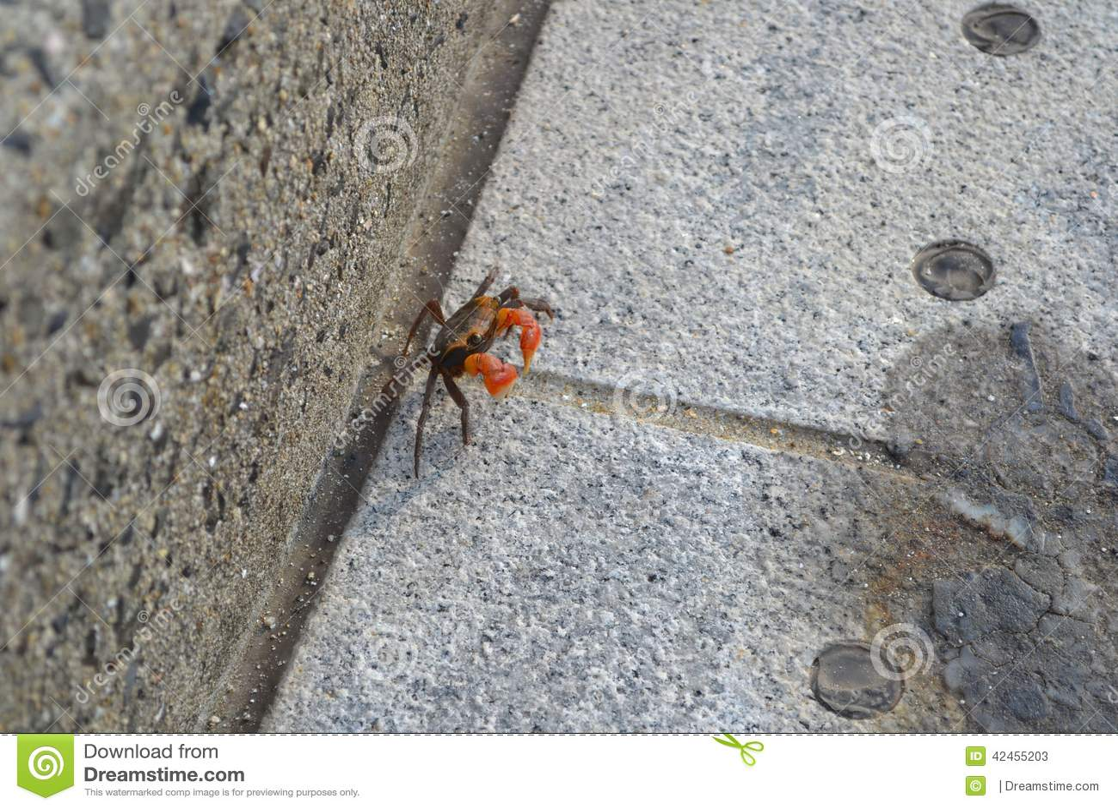 Eine Krabbe