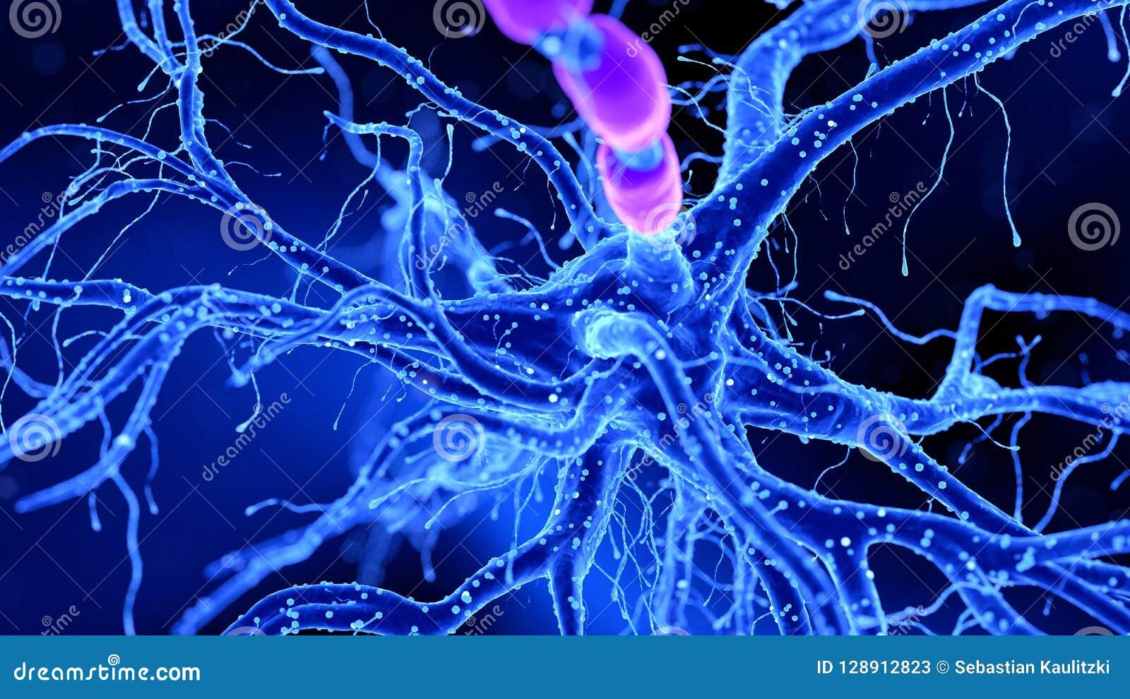 Eine Nervenzelle