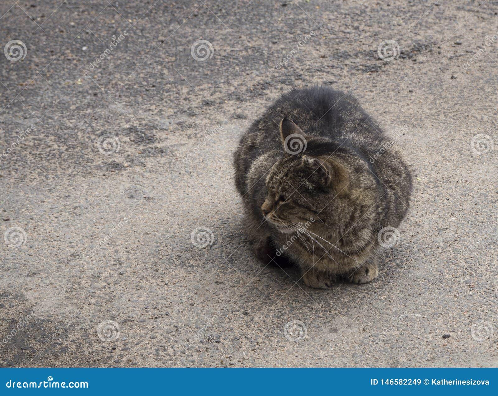 Eine obdachlose braune Katze auf der Stra?e