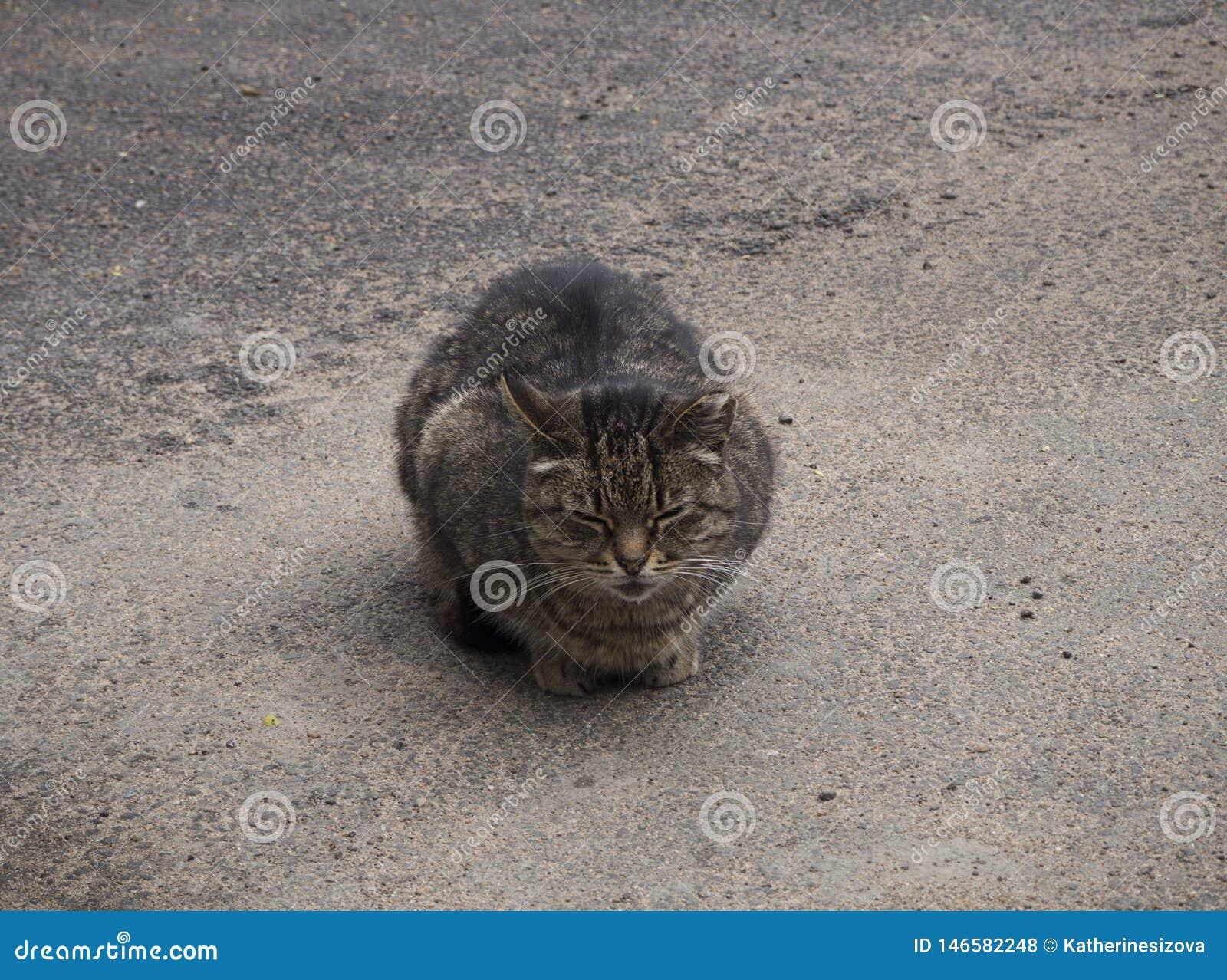 Eine obdachlose braune Katze schläft auf der Straße