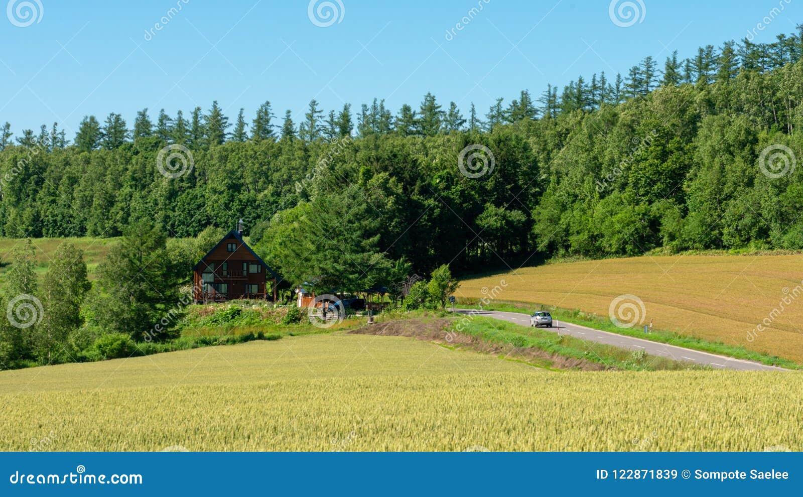 Eine panoramische Landstraße in Biei durch einen goldenen Reisbauernhof und