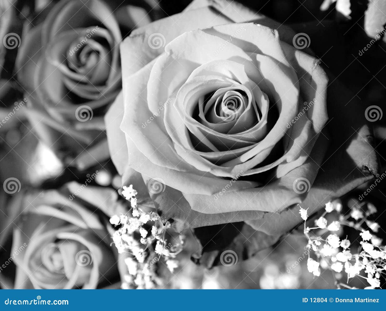 Eine Rose durch irgendeine andere Farbe?
