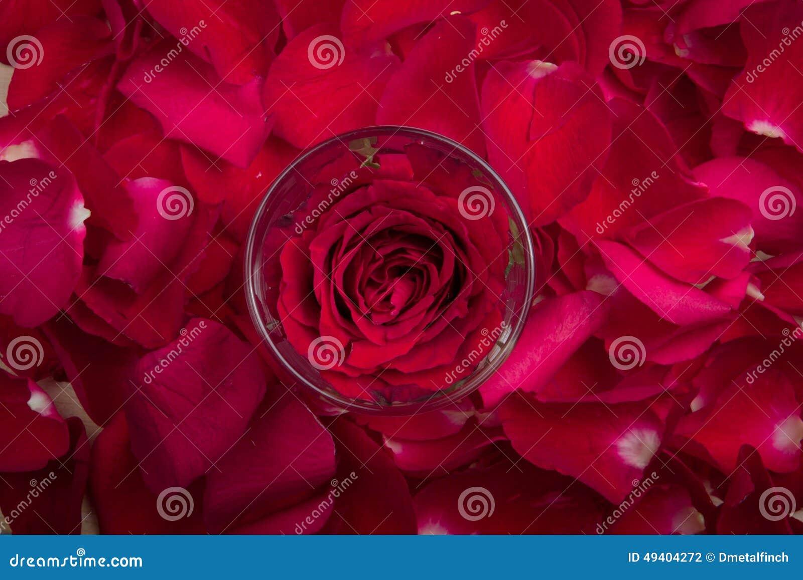 Download Eine Rote Rose In Einer Glasschale Stockfoto - Bild von liebe, weinlese: 49404272