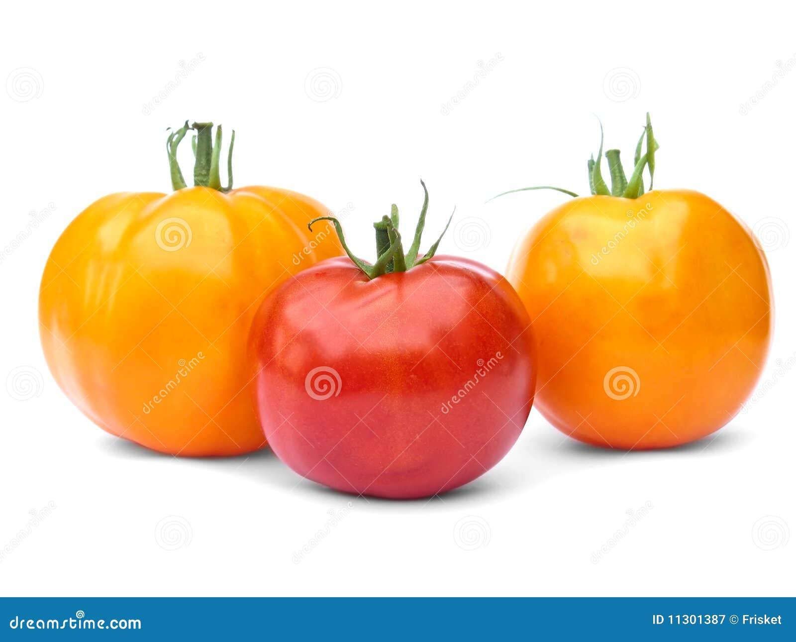 Eine roten und zwei gelben Tomaten