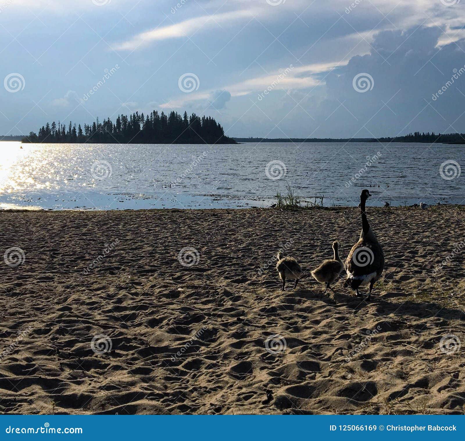 Eine schöne Ansicht von den Stränden von Astotin See mit einer Familie