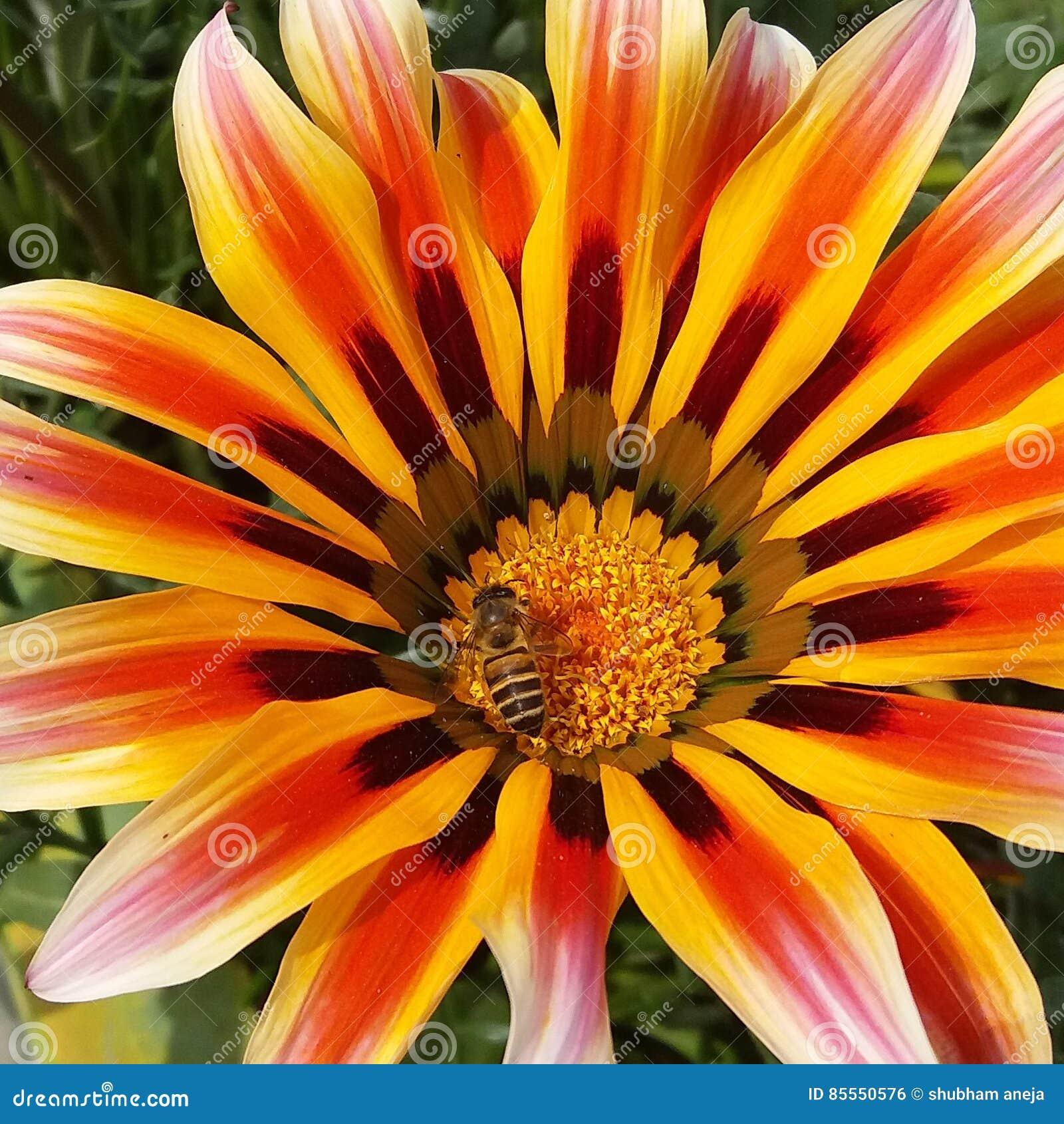 Eine schöne Blume mit Honigbiene