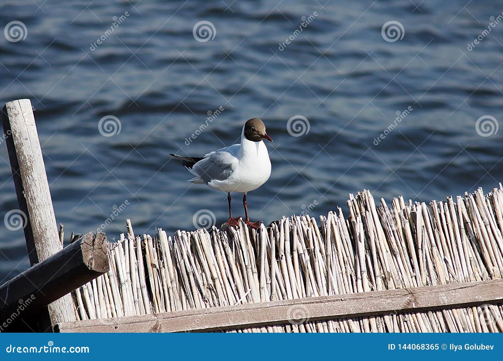 Eine Seemöwe sitzt auf dem Zaun auf dem Hintergrund des Wassers