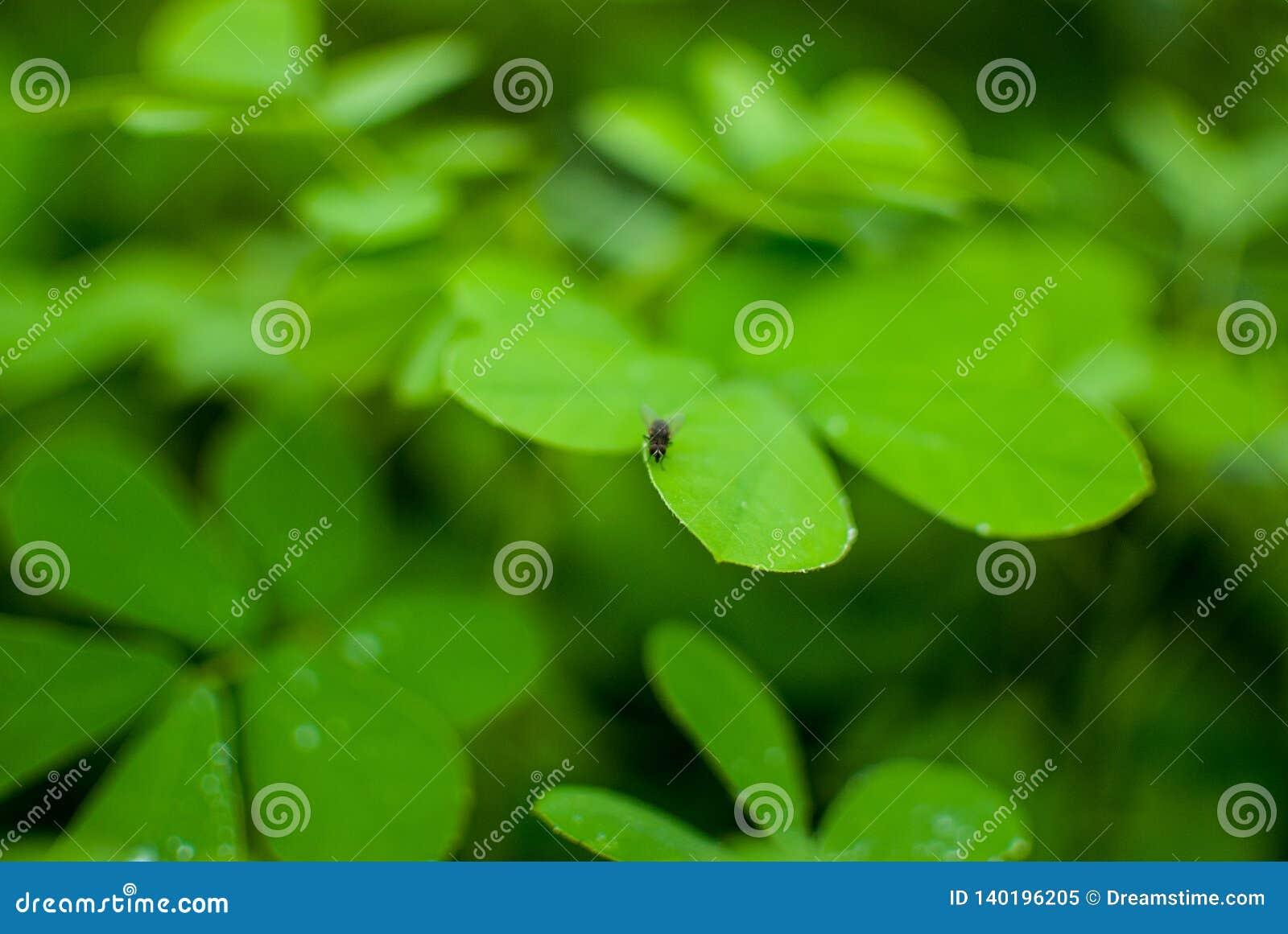Eine Stubenfliege auf dem Dschungel allein