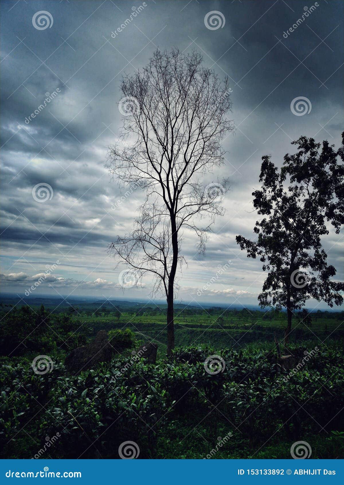 Eine tote Baumstellung hoch im enormen grünen Teppich
