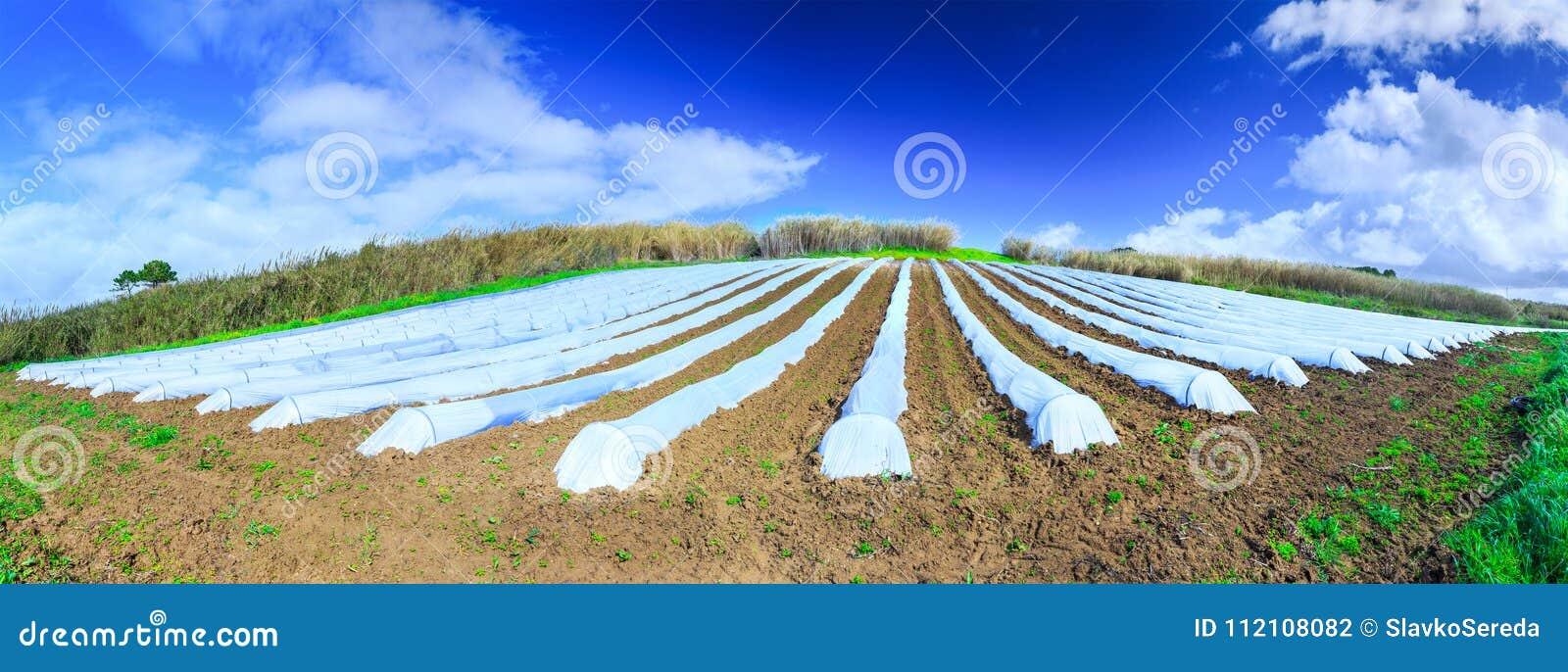 Eine typische Landwirtschaftstechnologie der Vorfrühlingsbearbeitung von