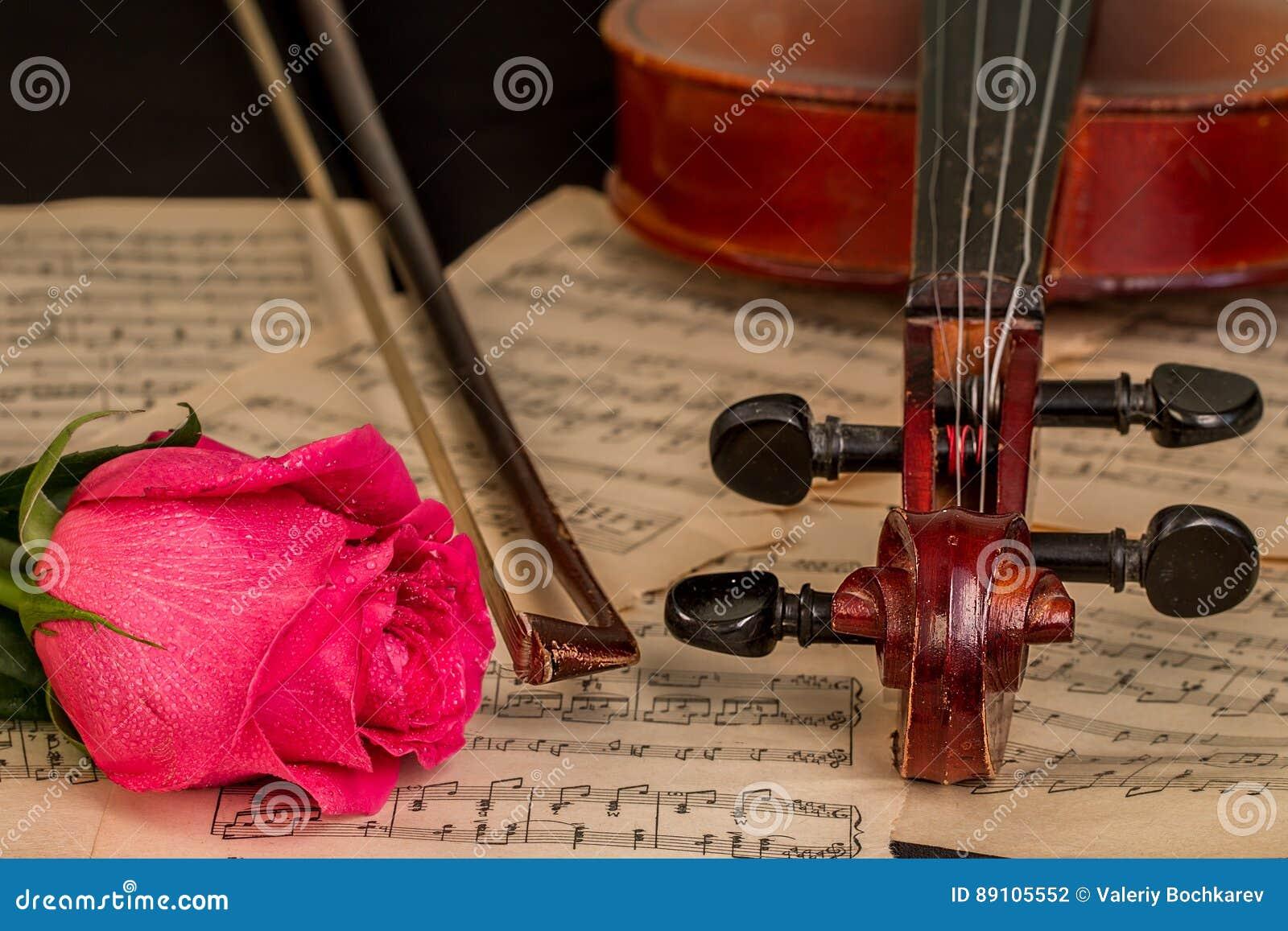 Eine Violine, Eine Rotrose Und Noten Stockfoto - Bild von schön ...