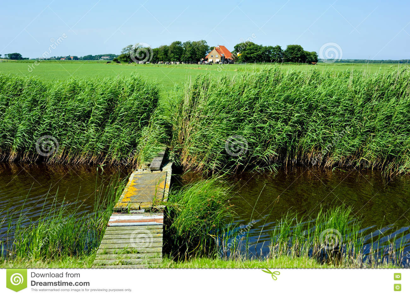 Eine Wiesenlandschaft von der niederländischen Insel Ameland