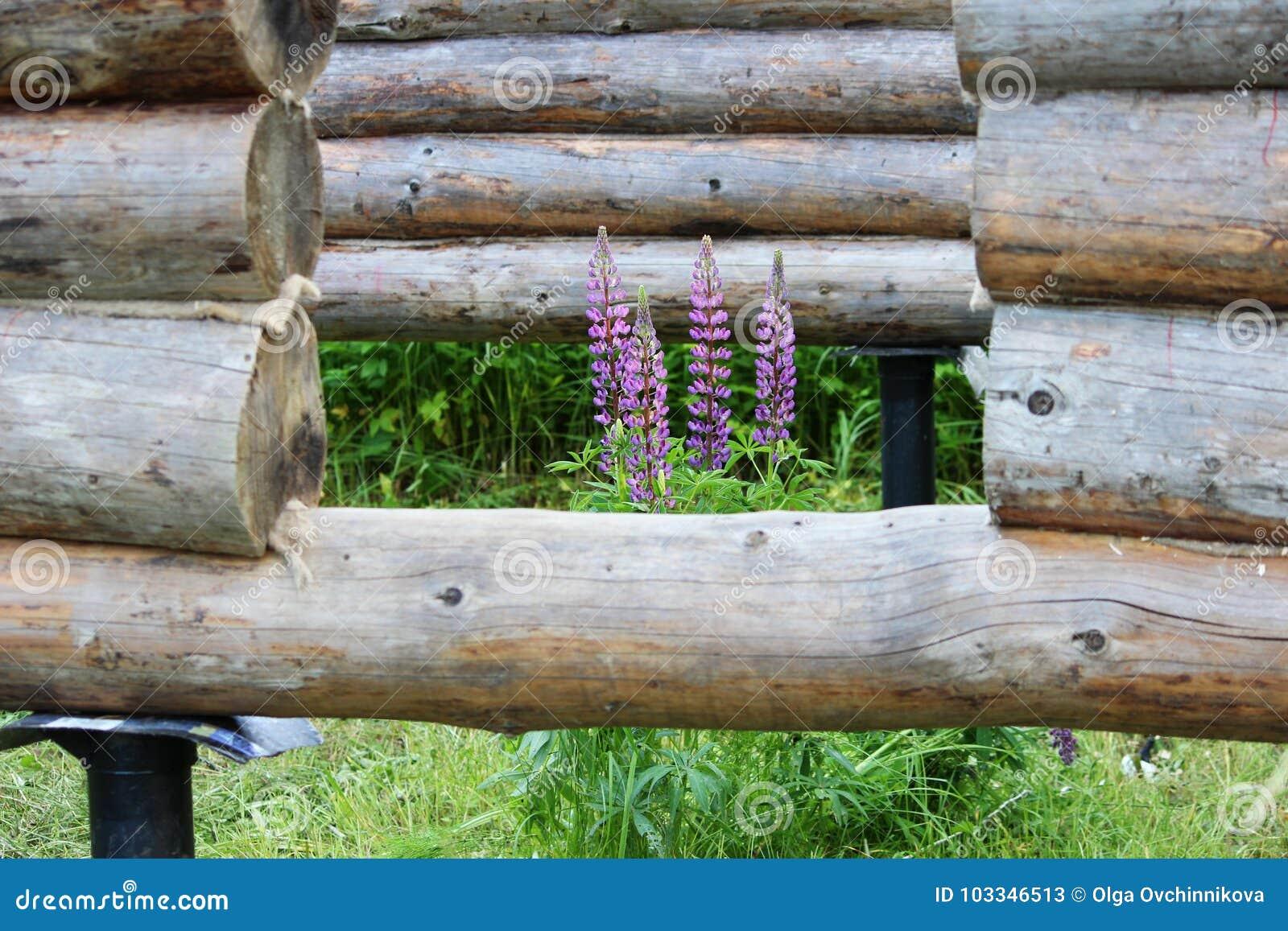 Einen Holzrahmen Und Das Bauen Eines Hauses Zusammenbauen Russland
