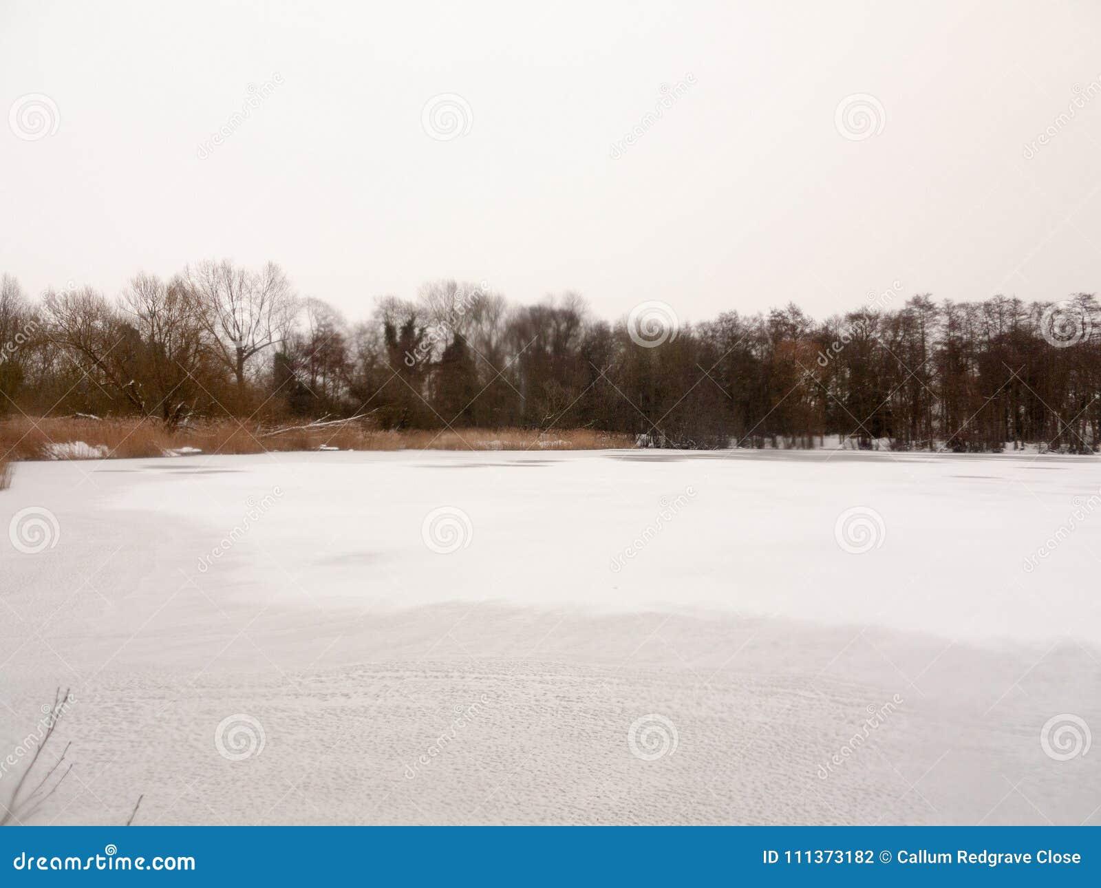 Eingefroren über des Oberflächenwassers des Sees des weißen bloßen Bäumen Schnee-Winters