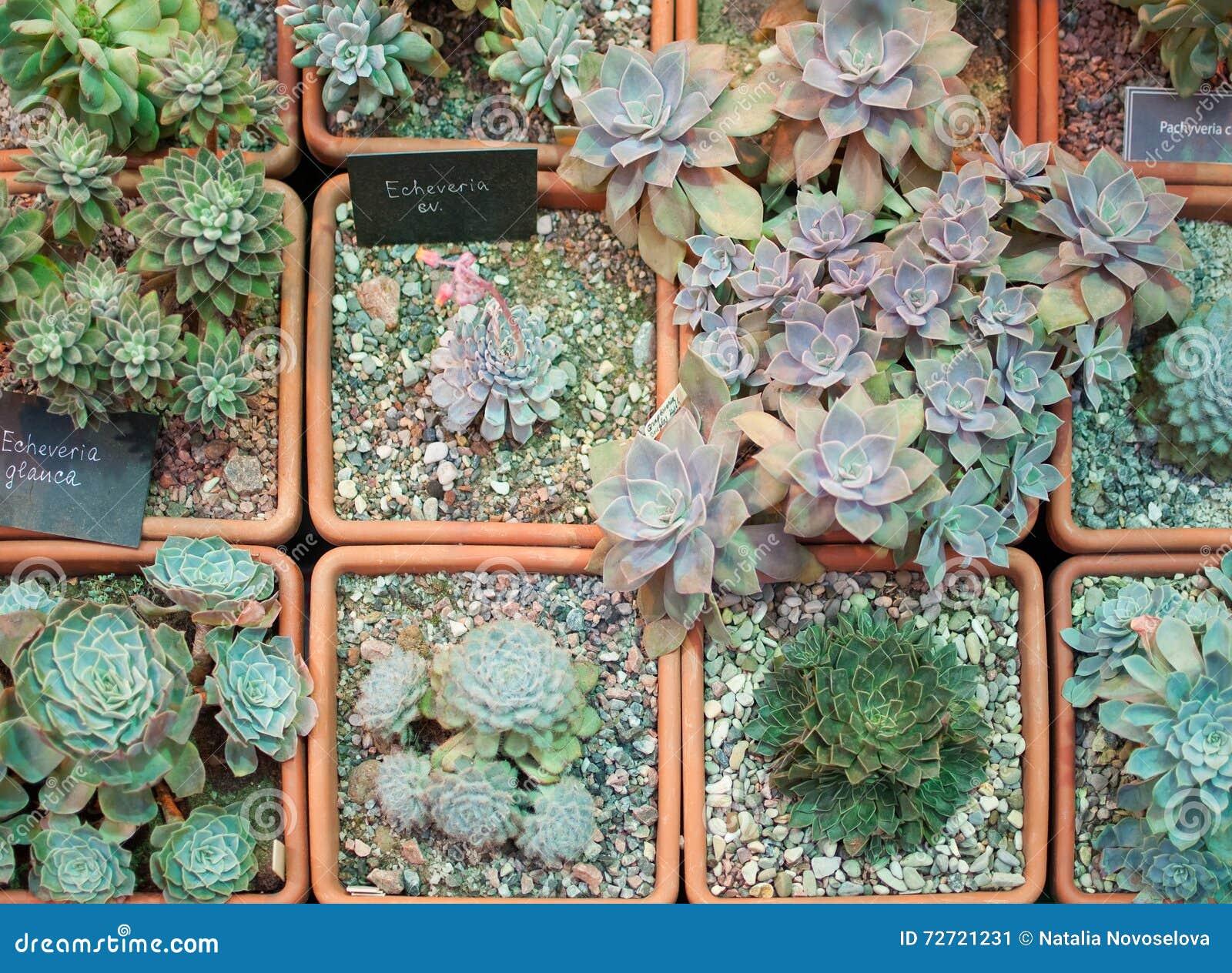 einige arten kaktus stock fotos melden sie sich kostenlos an. Black Bedroom Furniture Sets. Home Design Ideas