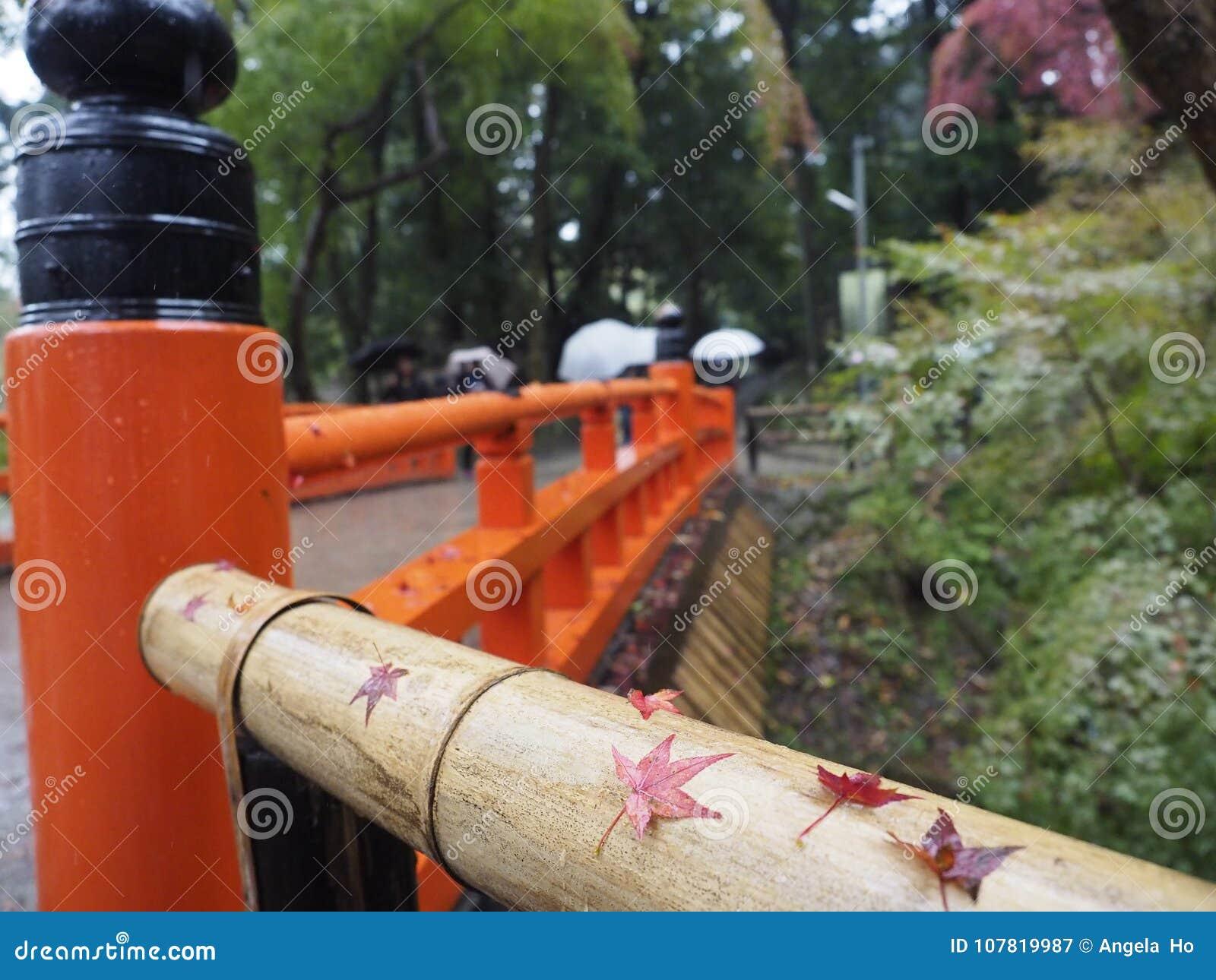 Einige Rotahornblätter gelegt auf das bambooo