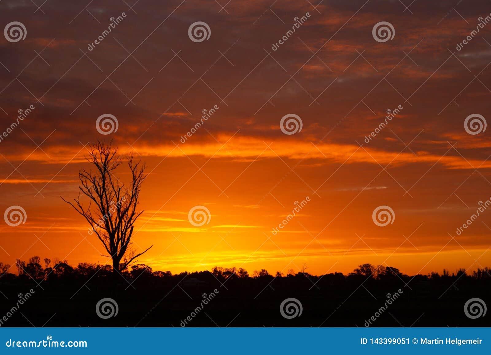 Einmal in einem Lebenszeitsonnenuntergang in Australien mit sillhouettes von B?umen, Cobram, Victoria, Australien