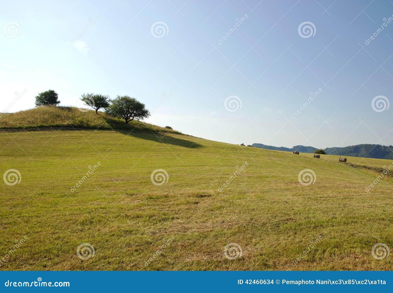 Einsame Bäume auf Hügel