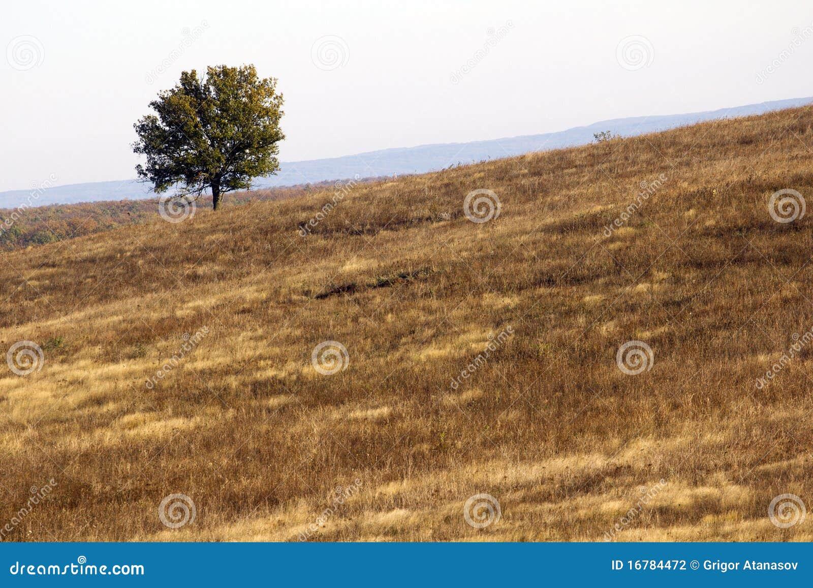 Einsame Baumlandschaft