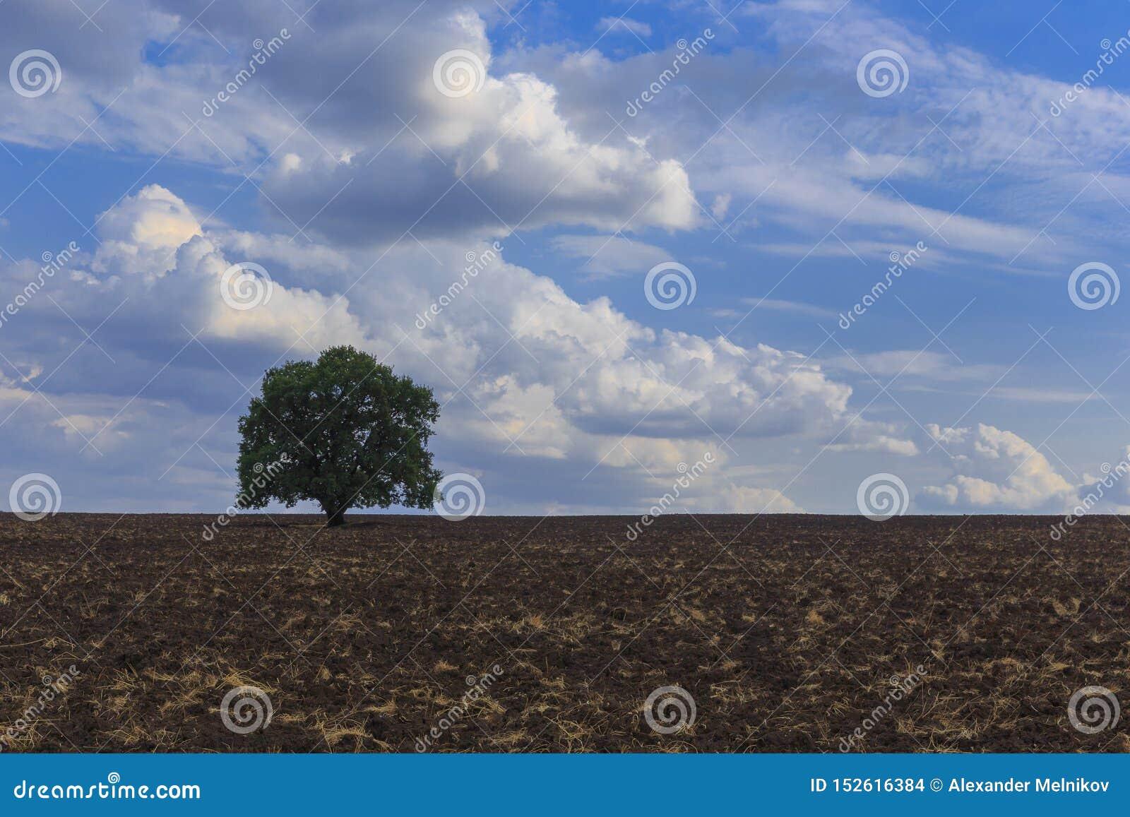 Einsame Baumstellung auf einem gepflogenen Feld auf dem Hintergrund von schönen Wolken