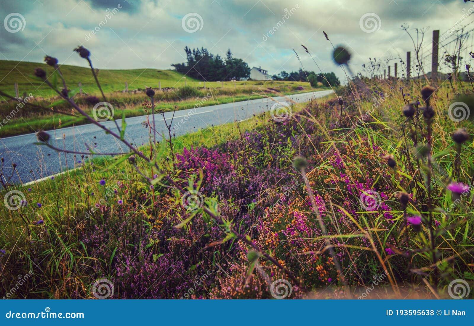 Einsamen Leere Straße Mit Bunten Blumen Nach Regeninsel