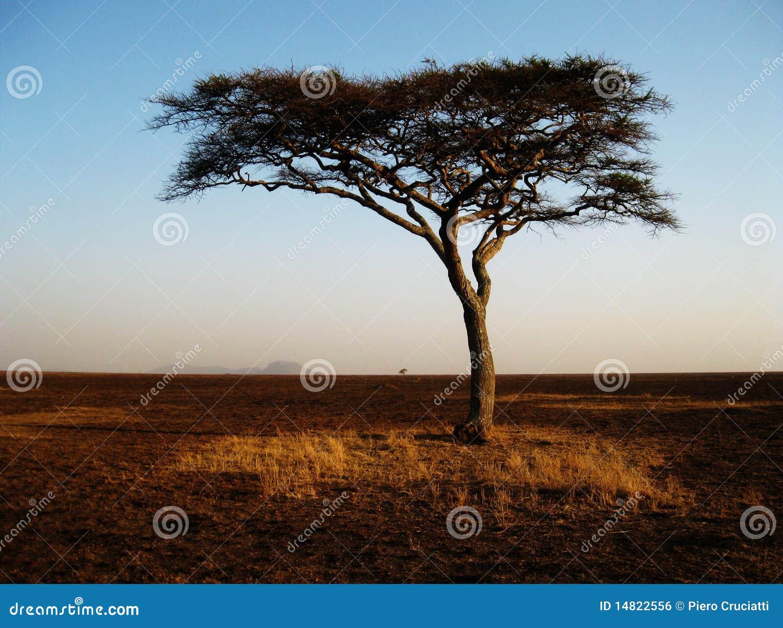 einsamer afrikanischer baum im serengeti lizenzfreies stockbild bild 14822556. Black Bedroom Furniture Sets. Home Design Ideas