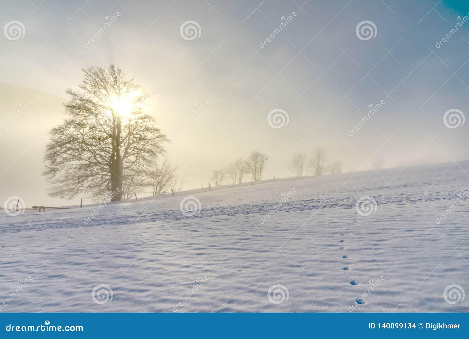 Einsamer alter Baum im gefrorenen Winter