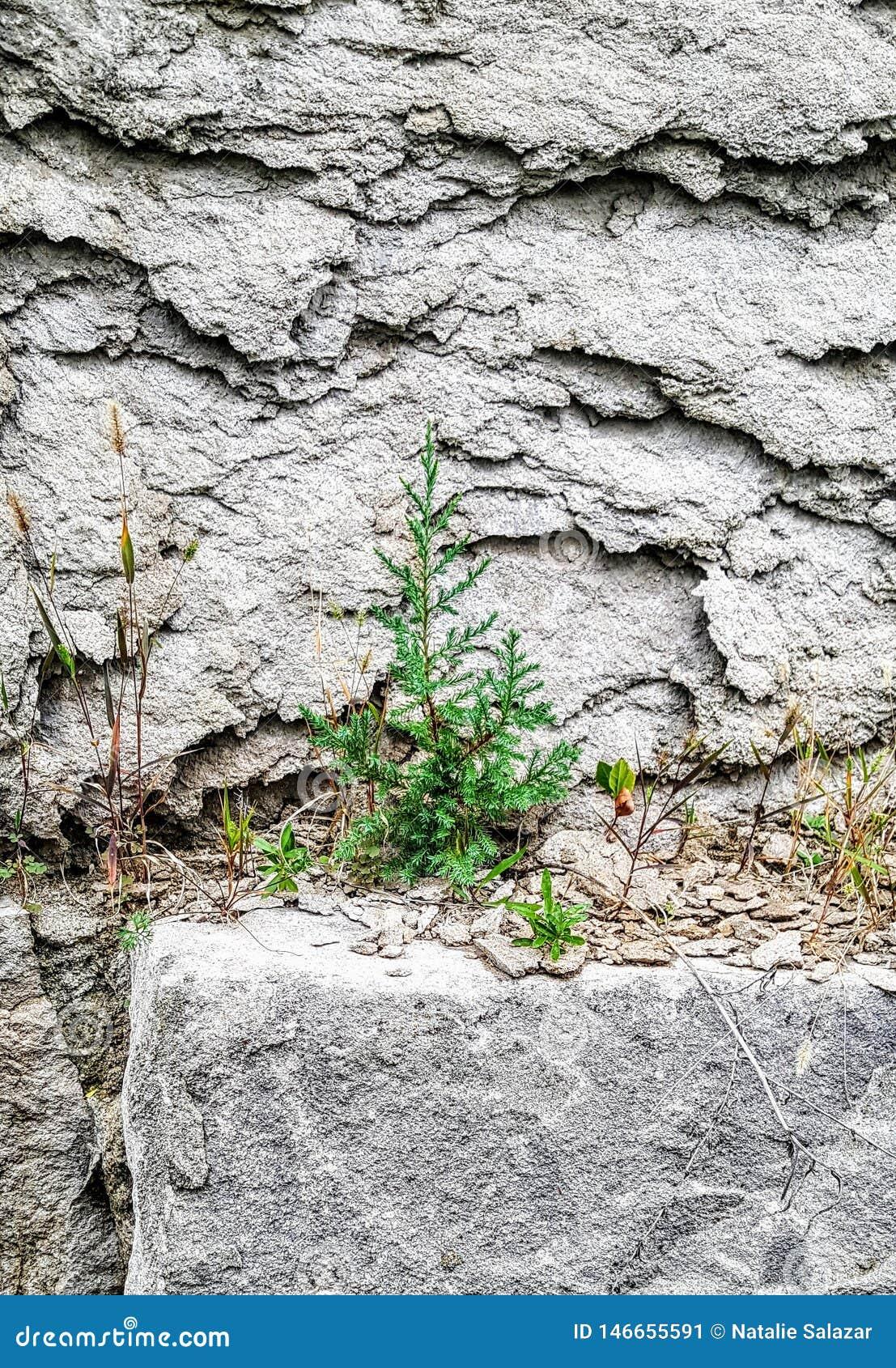 Einsamer Baum auf der Felsenwand