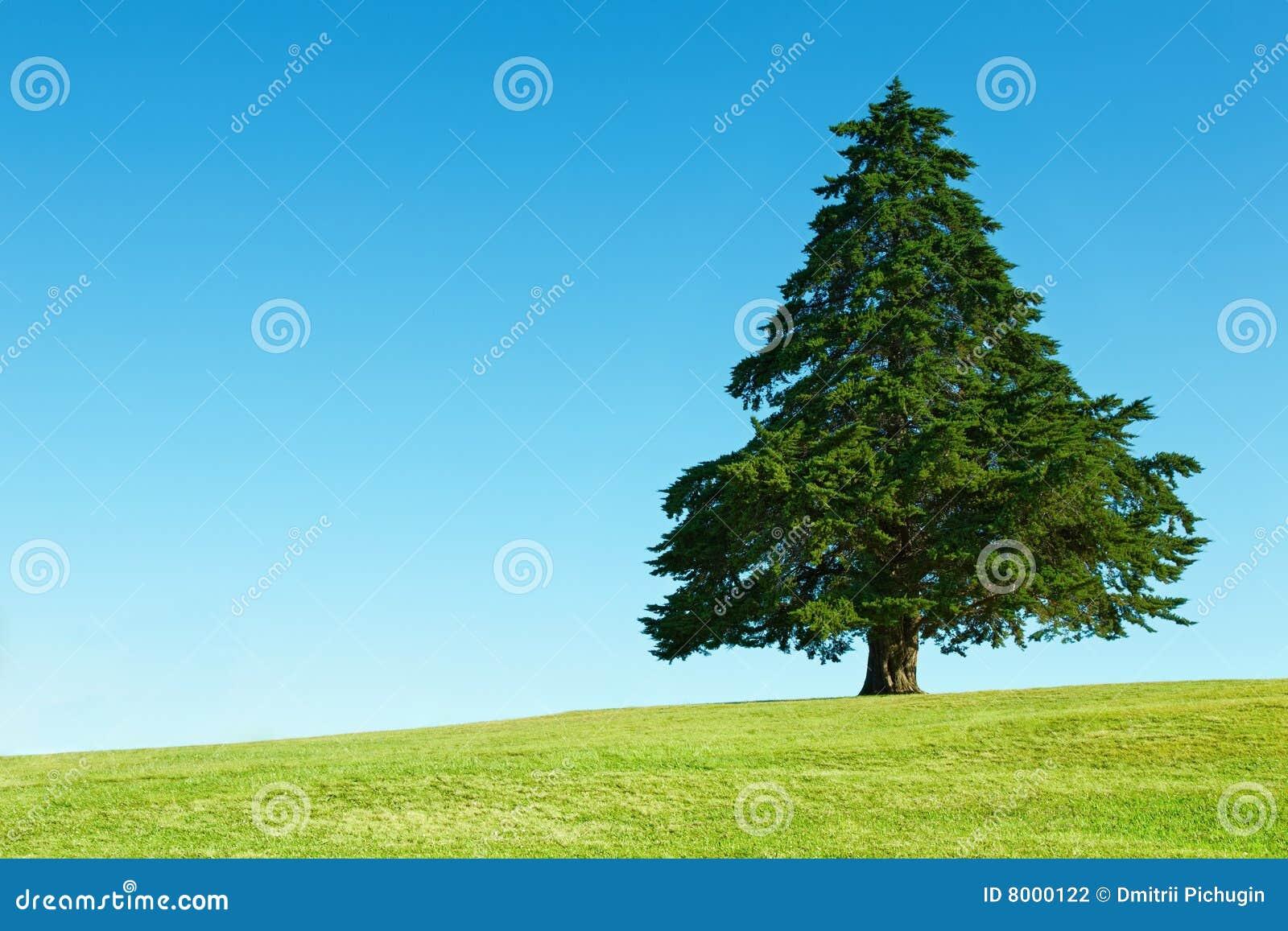 Einsamer Baum auf grünem Feld