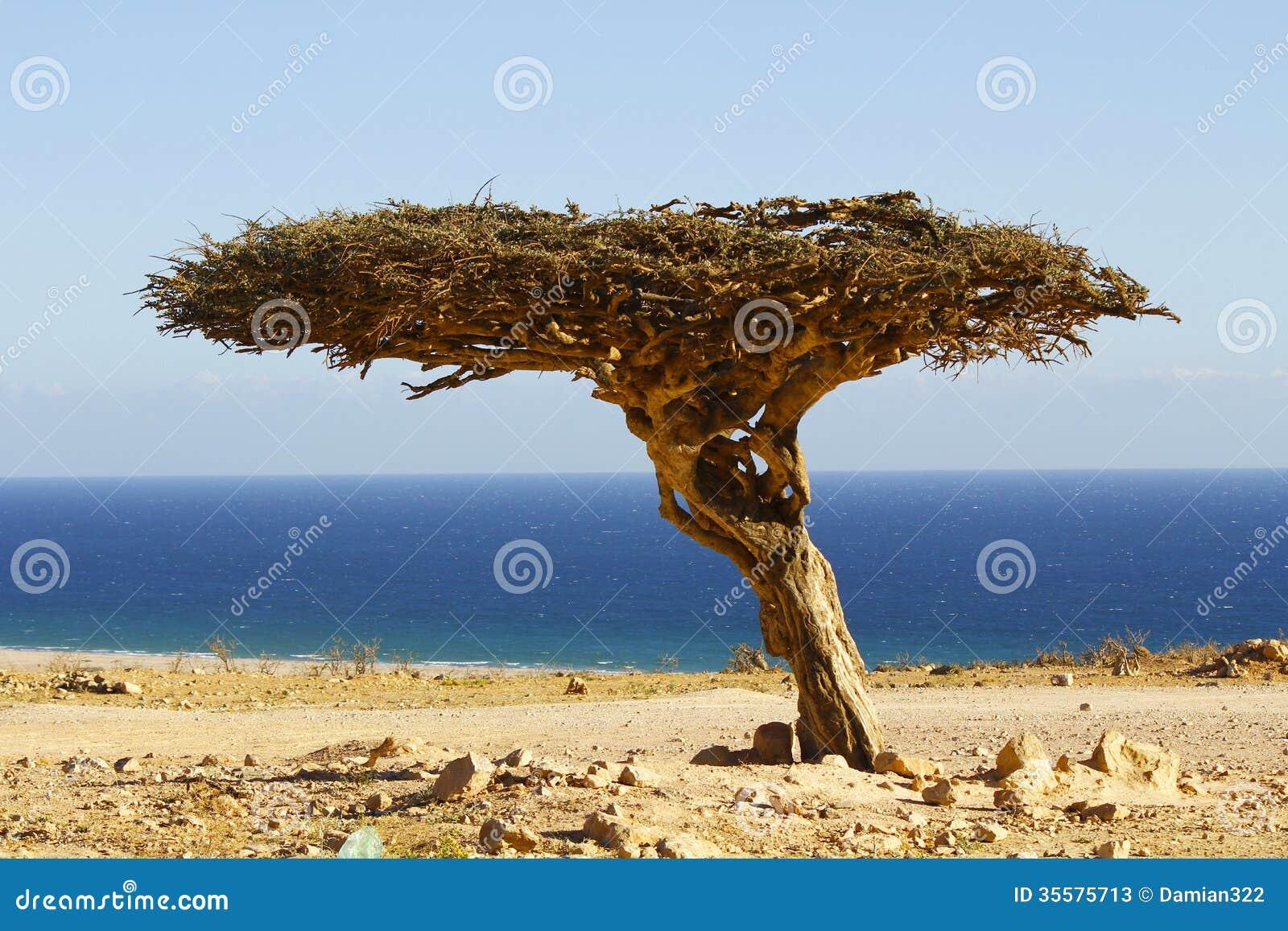 Der Oman