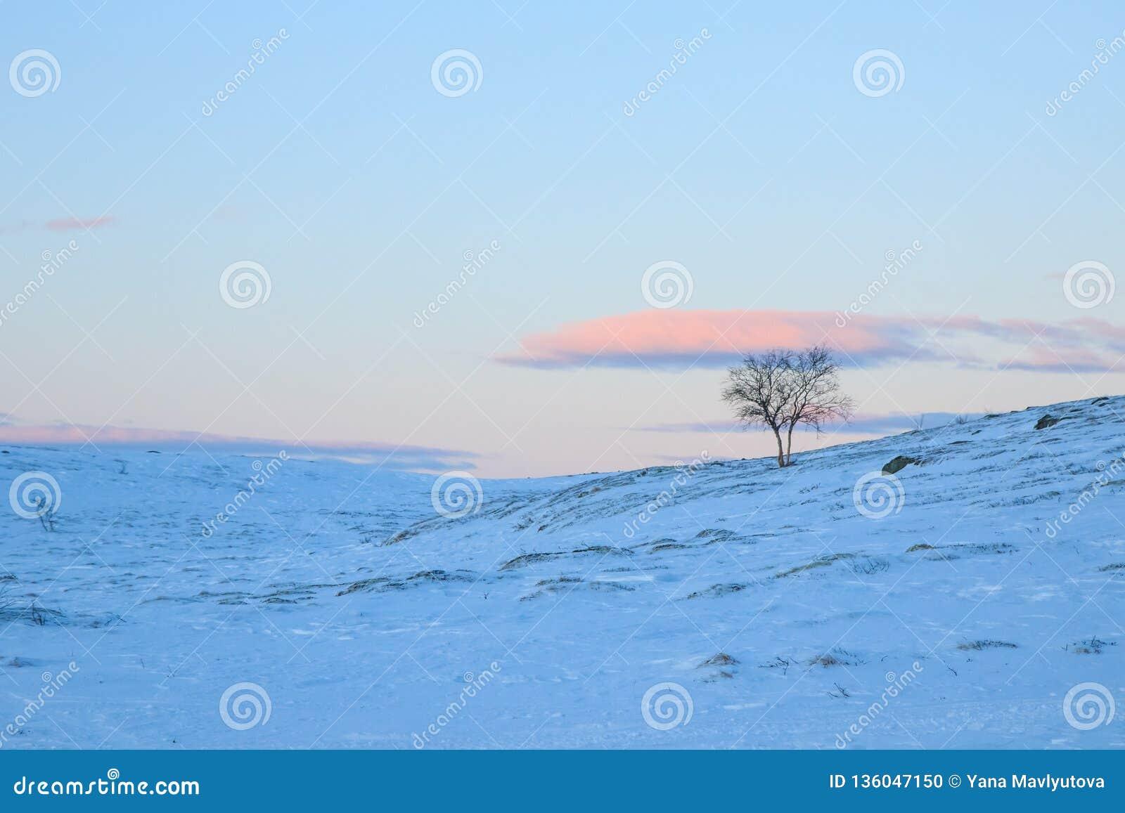 Einsamer Baum in der schneebedeckten Klippe der Gebirgshügel abwärts auf einem blauen rosa Sonnenuntergangabendhimmel mit Wolkenh
