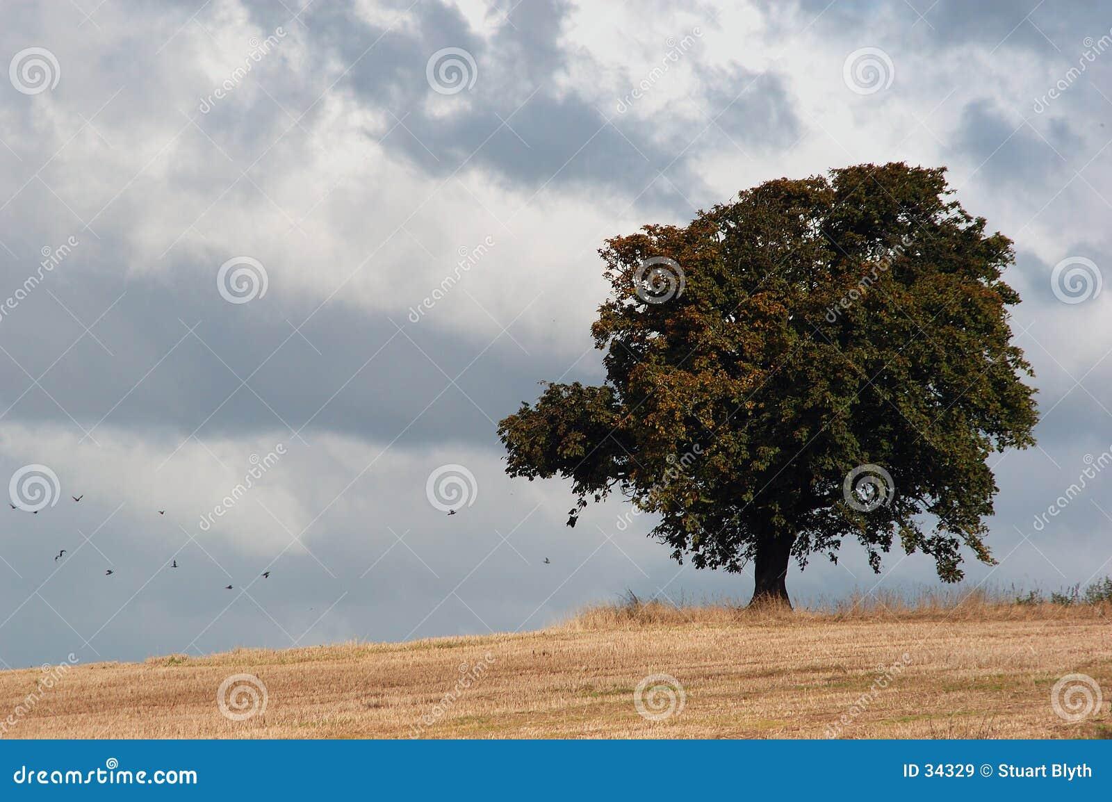 Einsamer Baum im Sturm