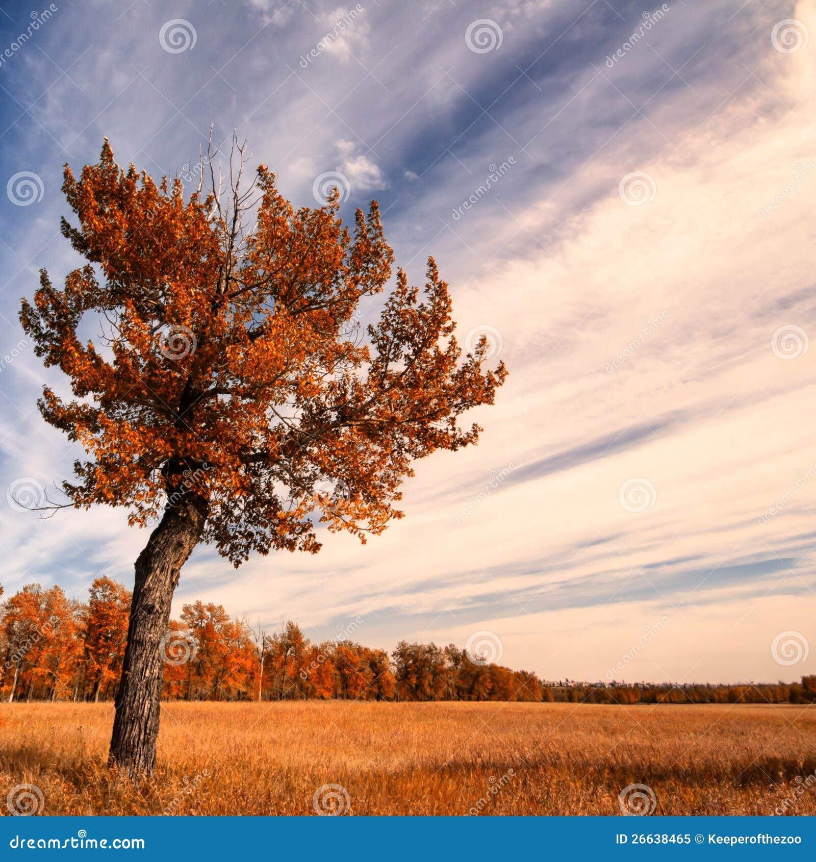 Einsamer Baum mit einem Herbst-Himmel