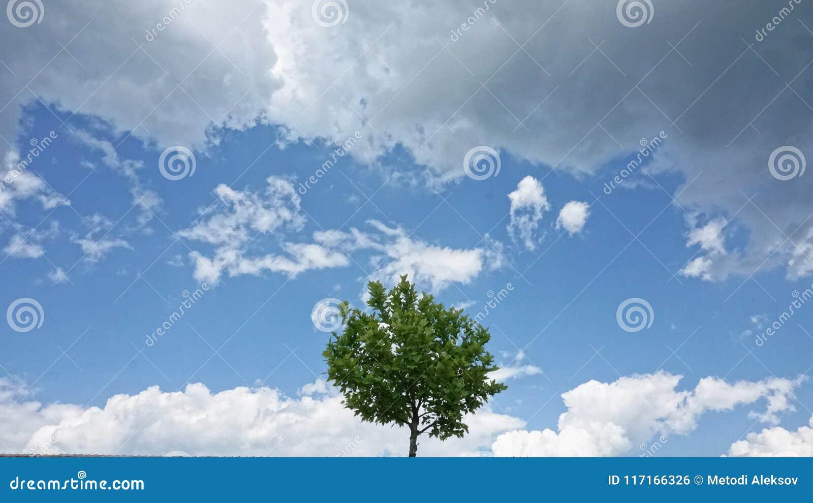 Einsamer Baum unter Wolken
