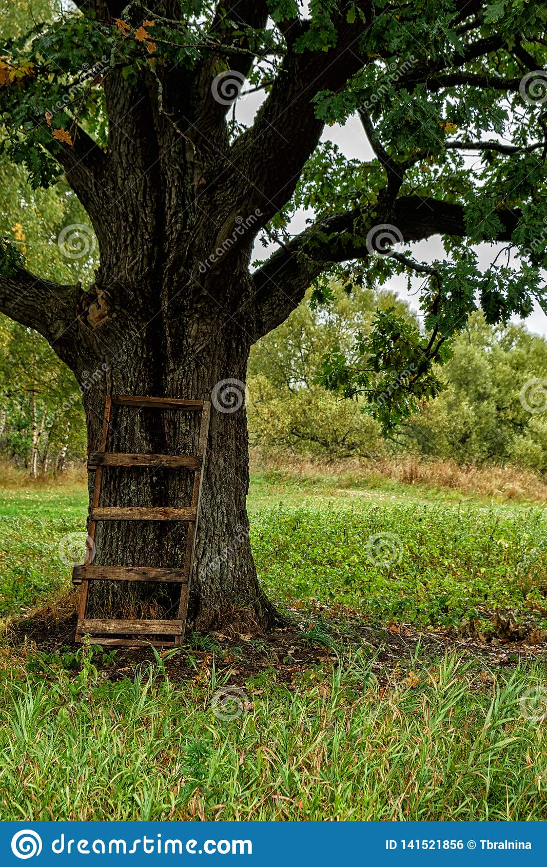 Einsamer Herbsteichenbaum