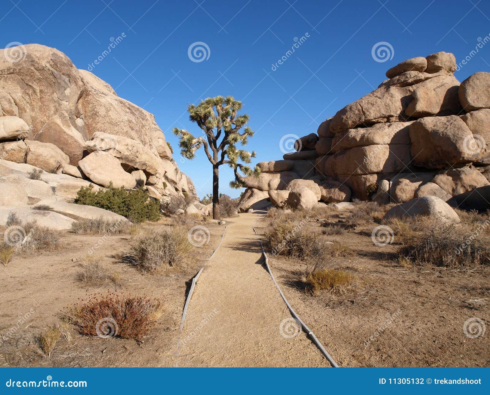 Einsamer Joshua-Baum