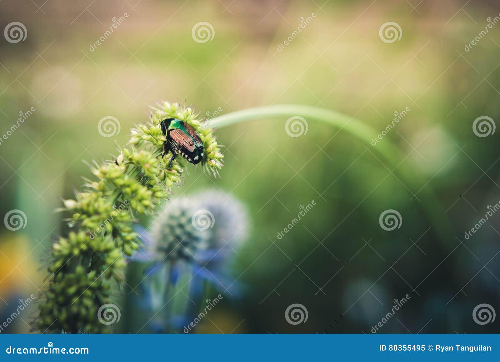 Einsamer Käfer