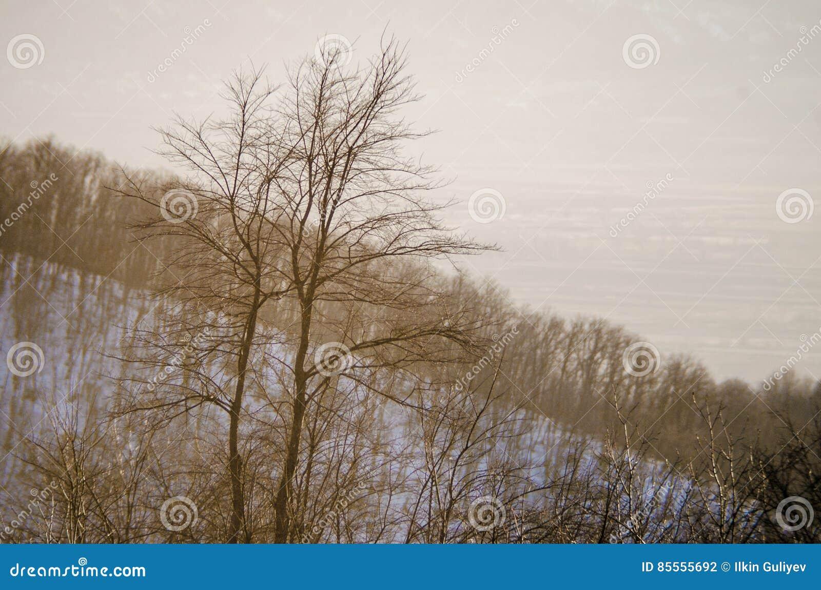 Einsames Baumschattenbild auf Gewann an der vibrierenden Orange des Sonnenuntergangs Berge von Aserbaidschan Kaukasus