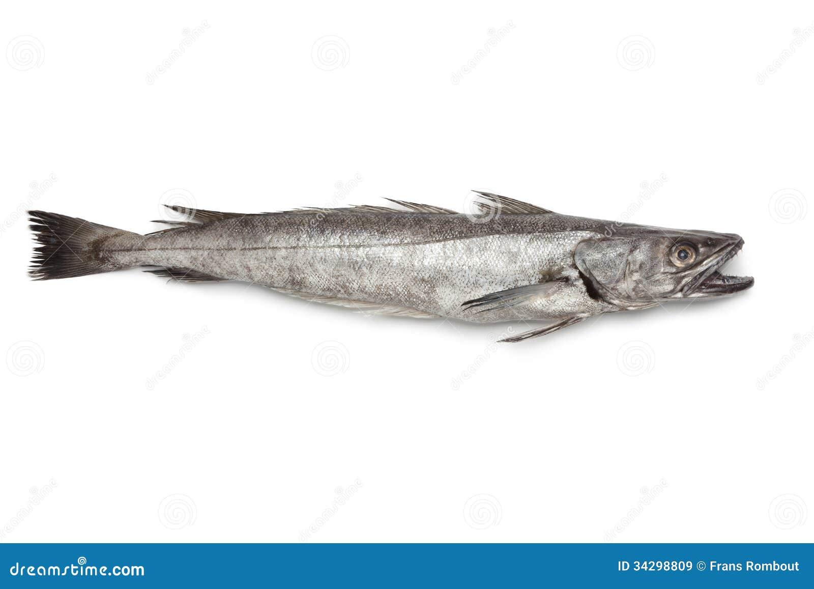 Einzelne frische Hechtdorschfische