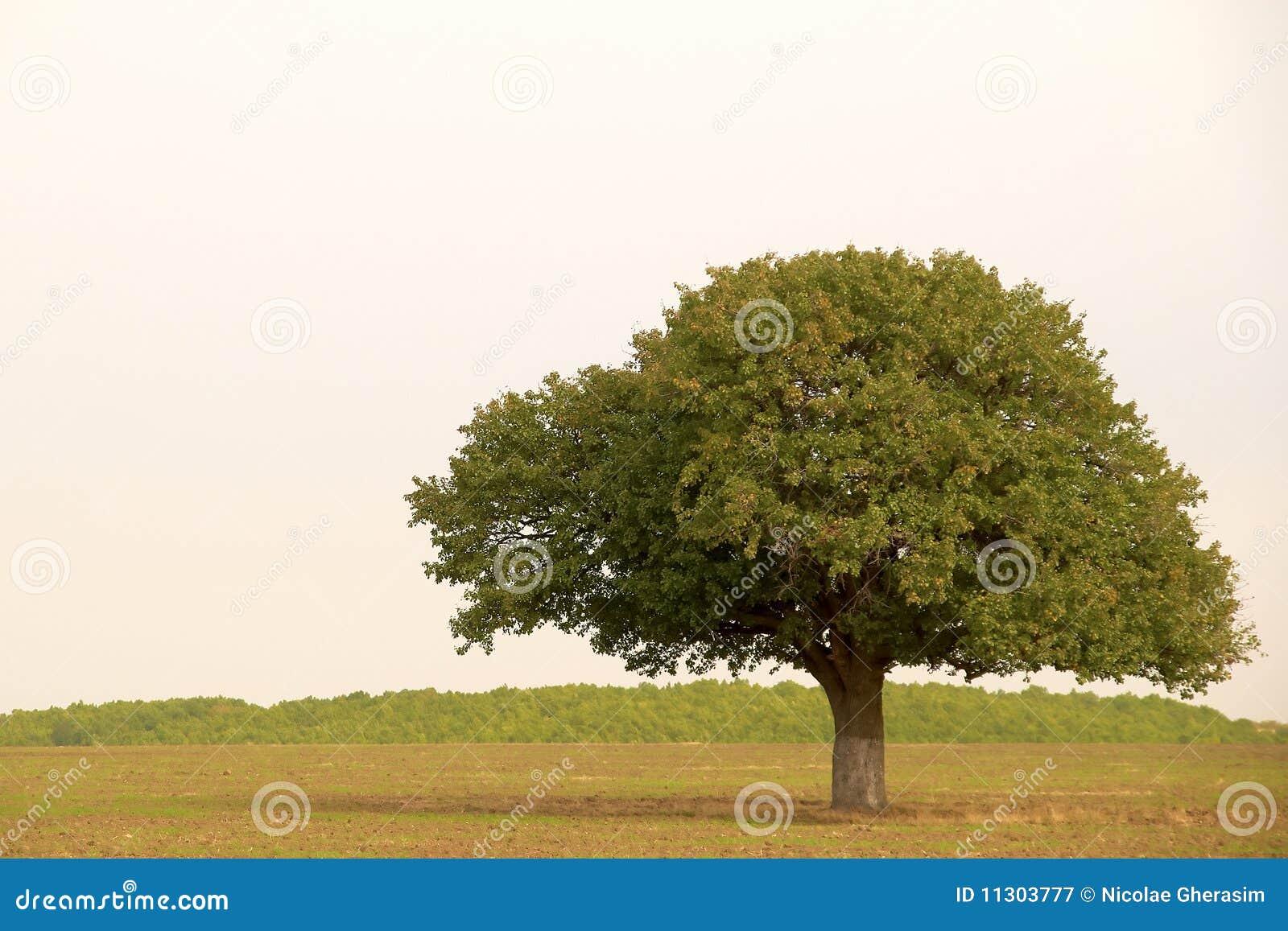 Einzelner Baum in der Landschaft