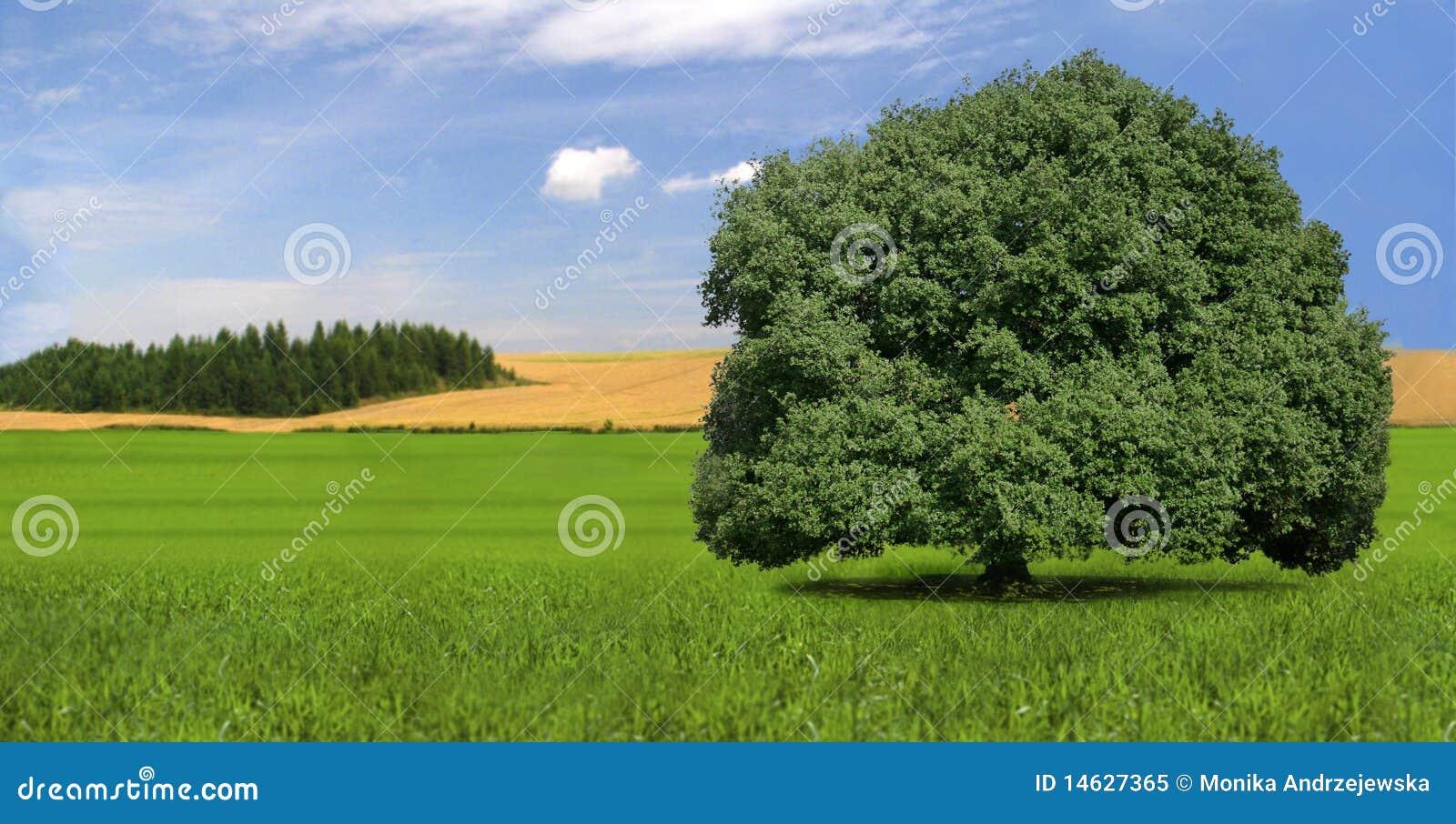 einzelner starker baum auf dem gebiet landschaft sommer lizenzfreies stockfoto bild 14627365. Black Bedroom Furniture Sets. Home Design Ideas
