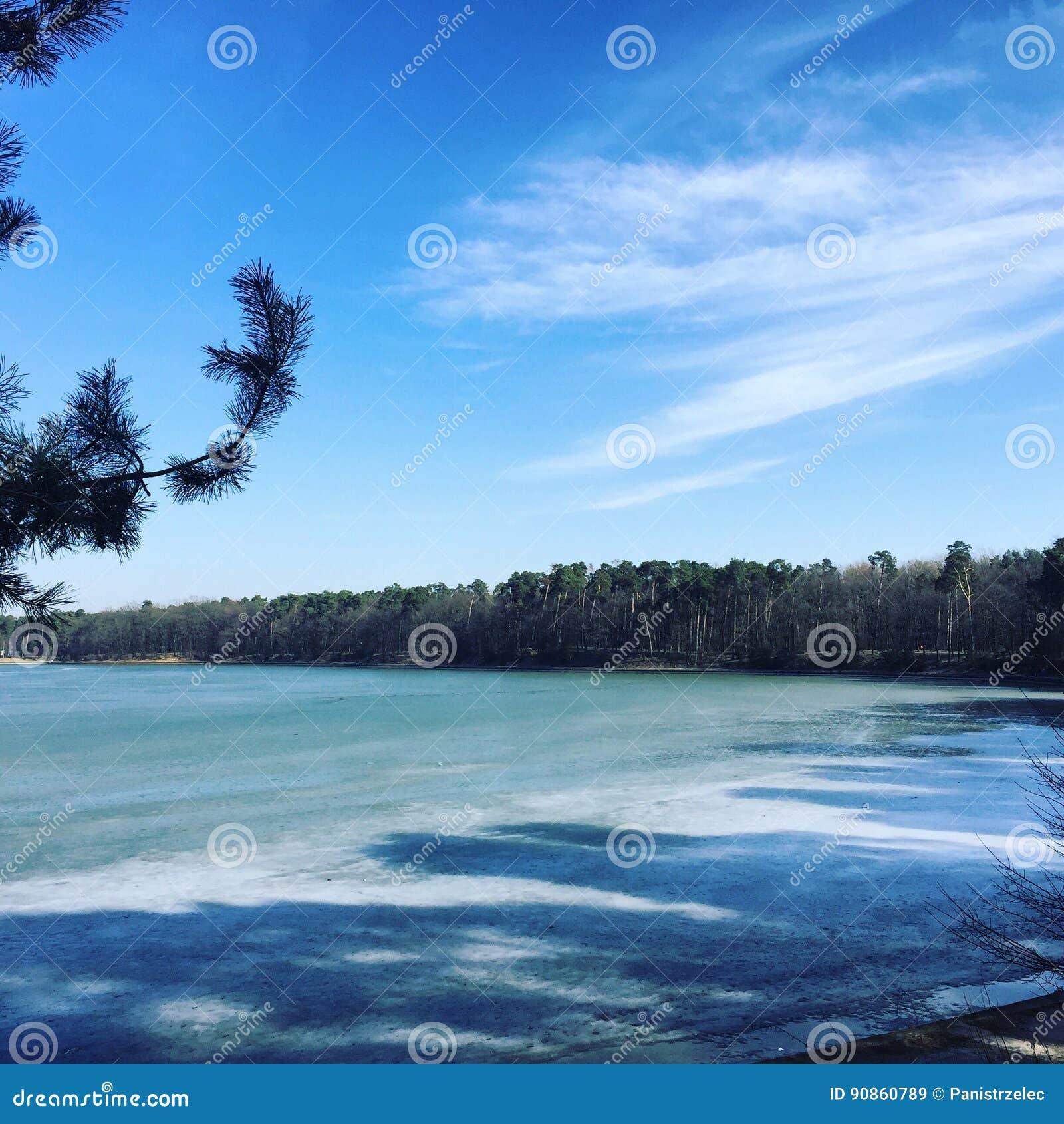 Eis auf einem See und einem Wald